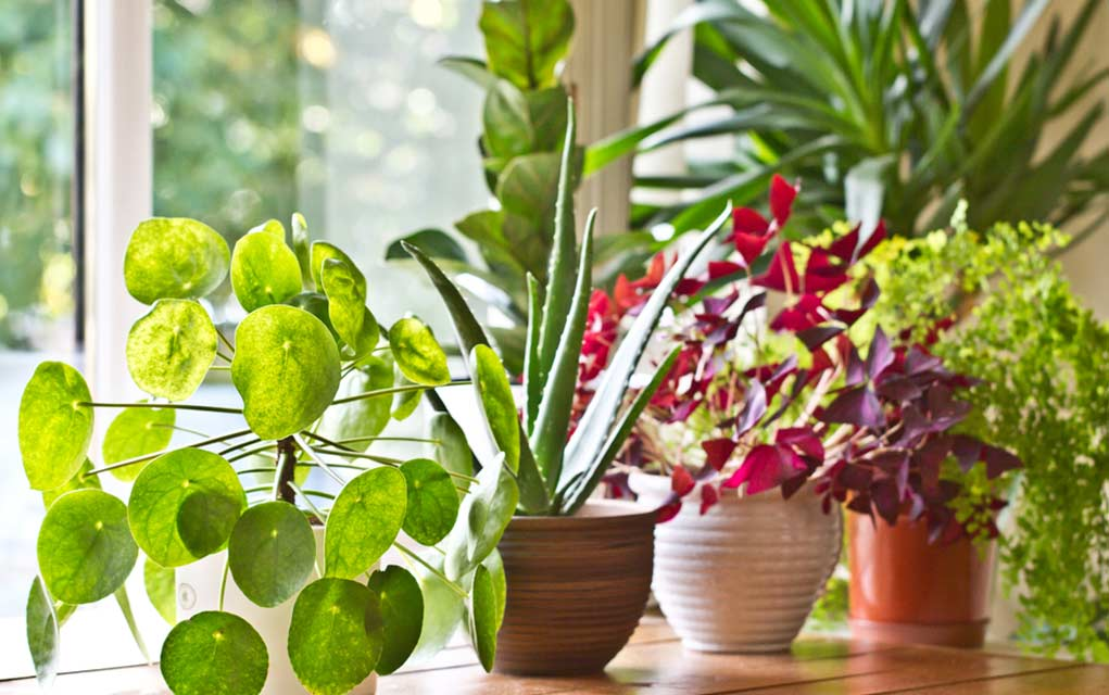5 Benefits of More Plants in Your Home
