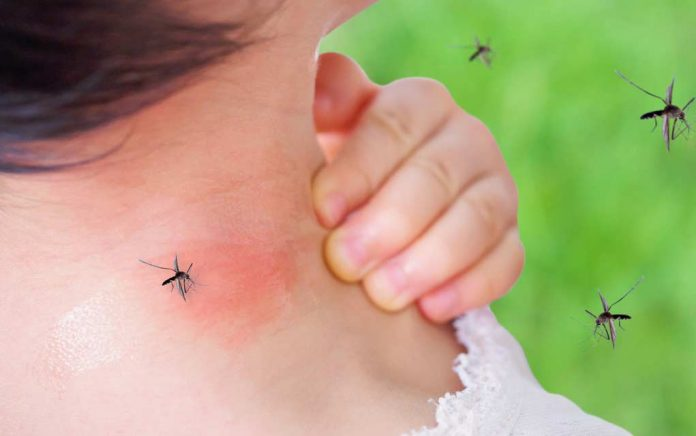 Mosquitos-How-to-Make-Them-Buzz-Off-2