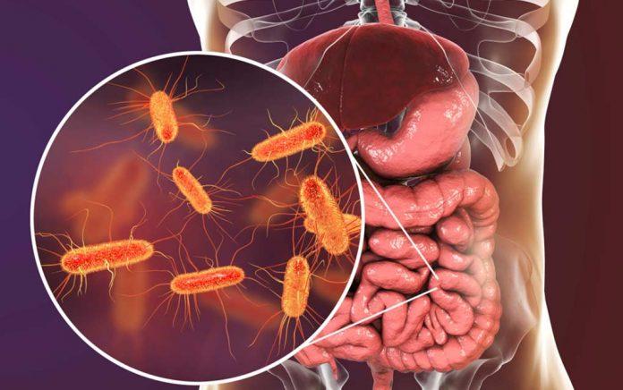 4 Ways To Optimize Probiotic Effectiveness